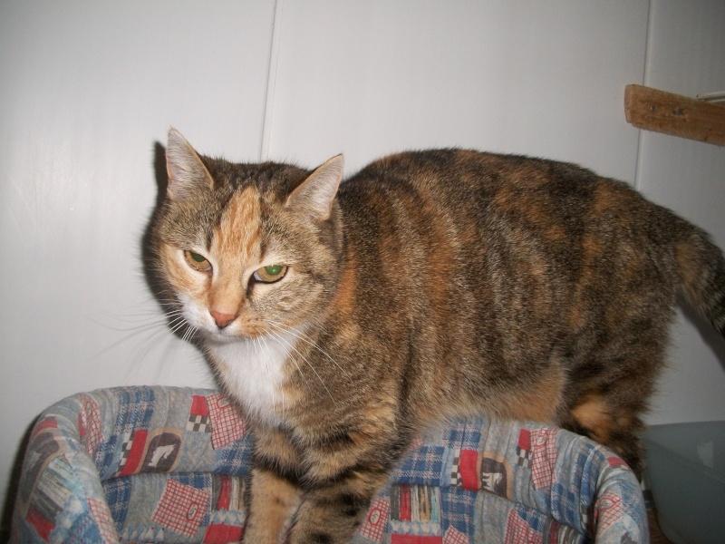 MIMI (femelle européenne Tricolore) Fifi_016