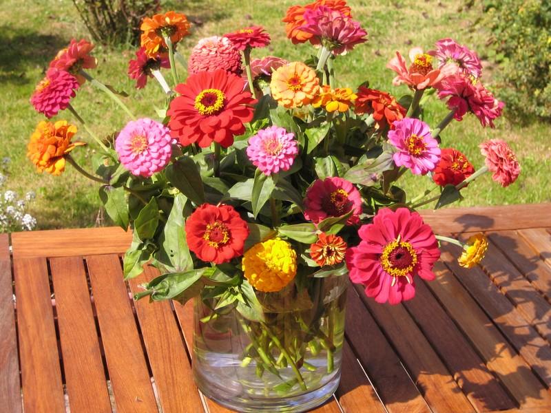 Joyeux anniversaire Francesca Fleurs10