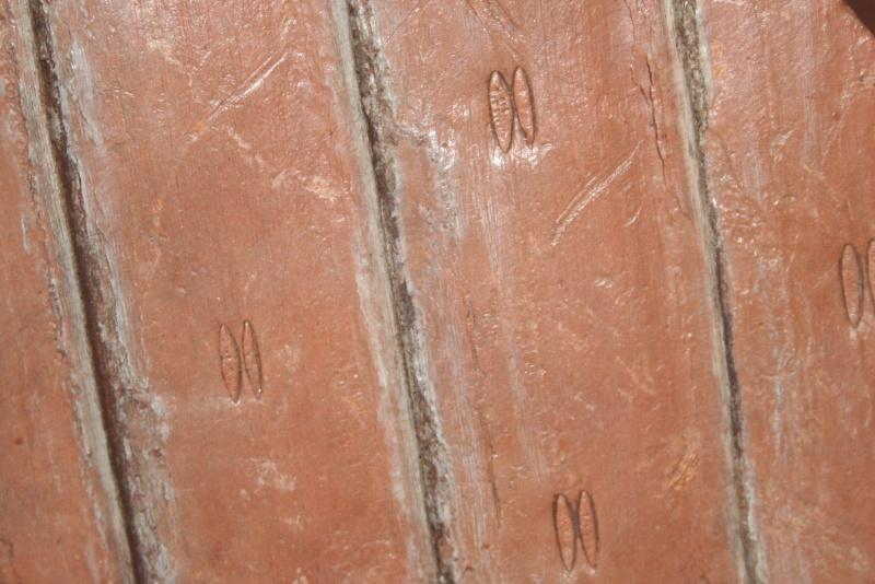 Grès (Sandstone) Schistes( Shale) types de conservation Img_1011