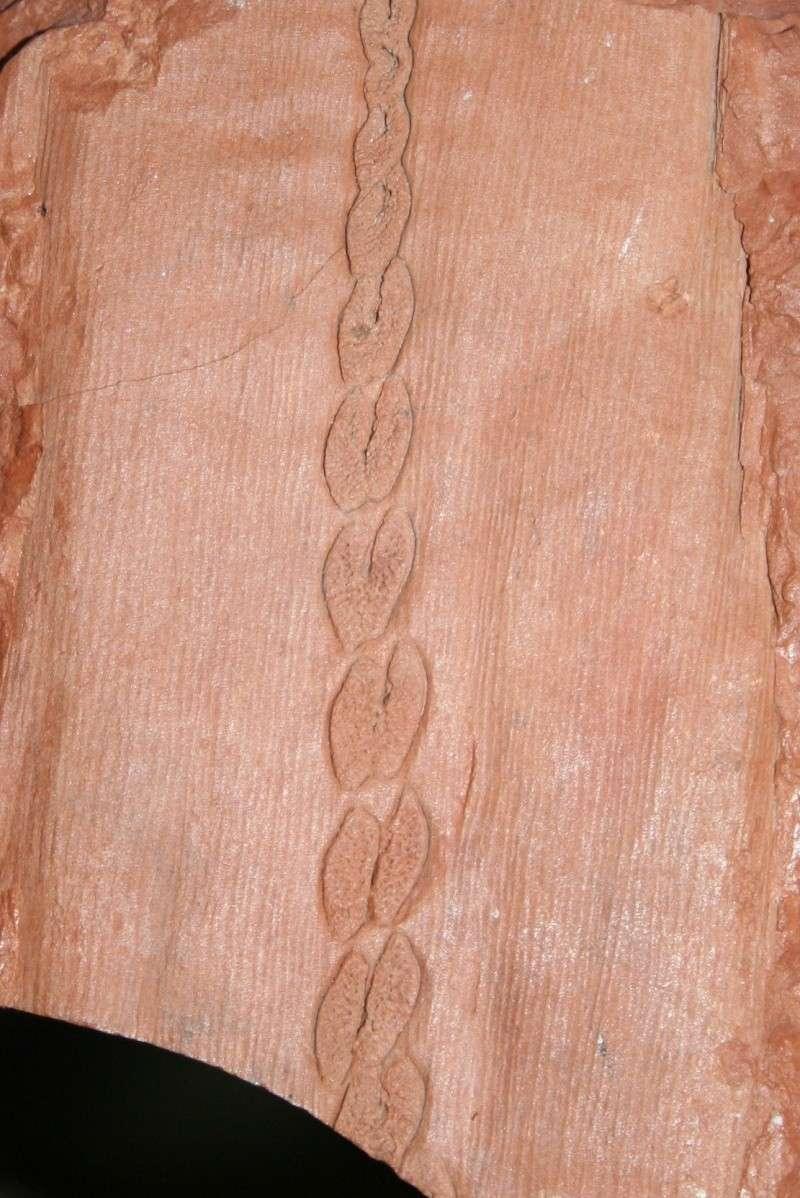 Grès (Sandstone) Schistes( Shale) types de conservation Img_1014