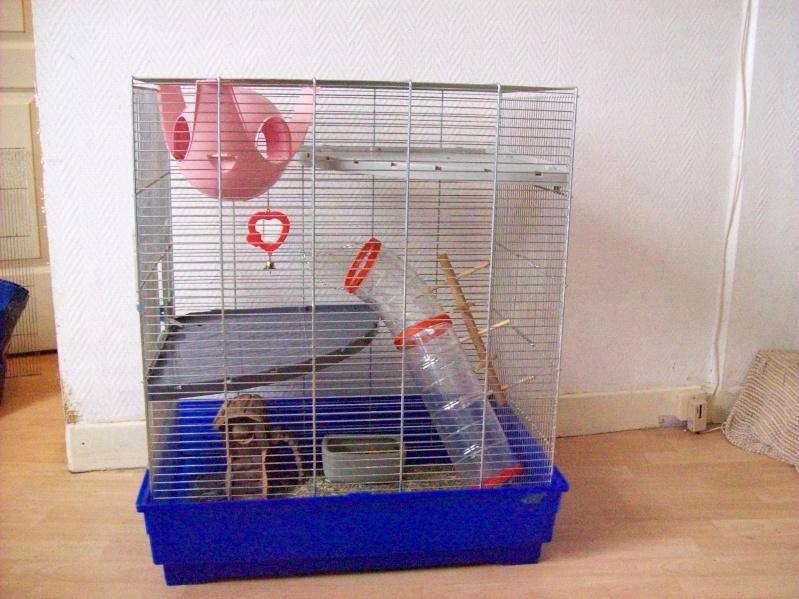 Cage pliante (5 rats) imac a 45e (photo en bas page 2)59NORD 101_0210