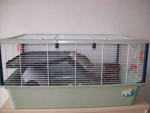 Cage pliante (5 rats) imac a 45e (photo en bas page 2)59NORD 98874h11