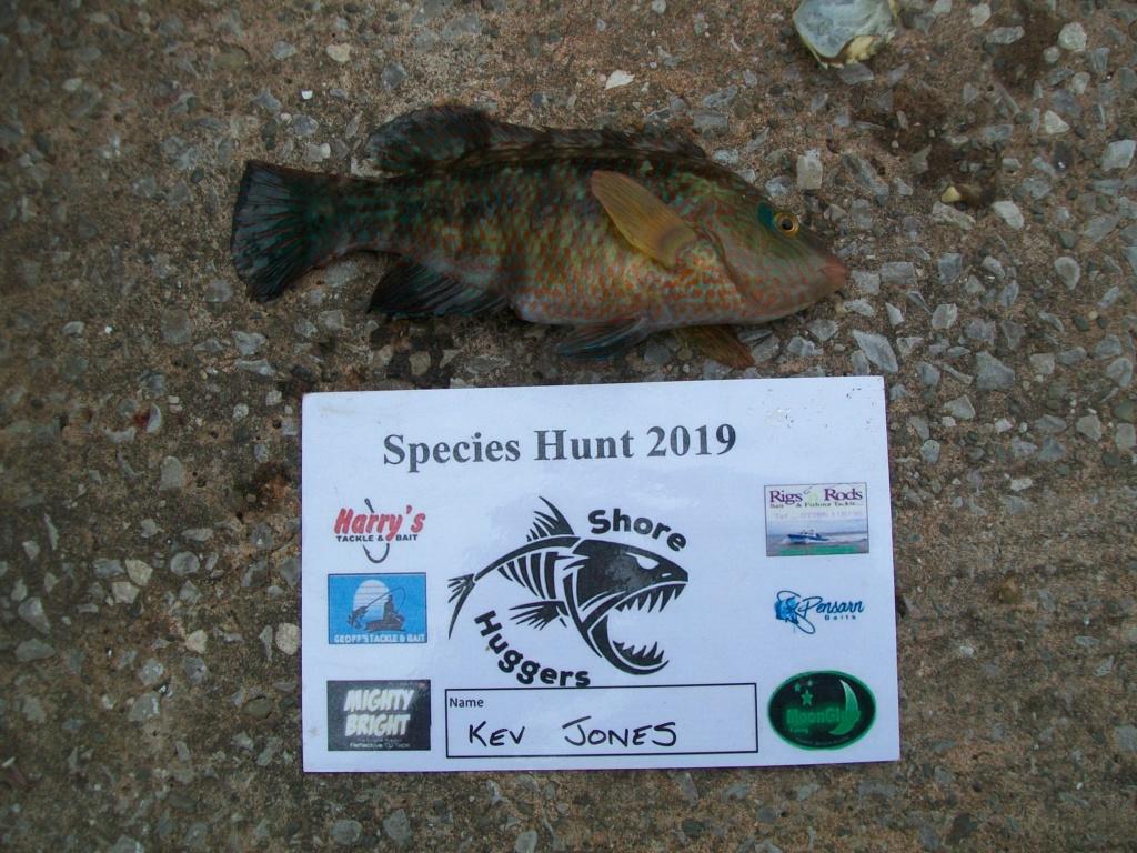 Shore specimens 2019 100_2012