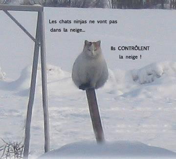 Un peu d'humour... Chatne10