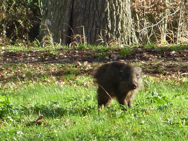 Un curieux visiteur... Grouic15