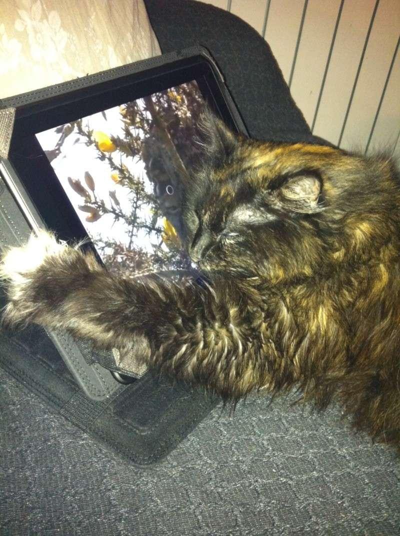 le chat et le net sa fatigue !!! Secure11