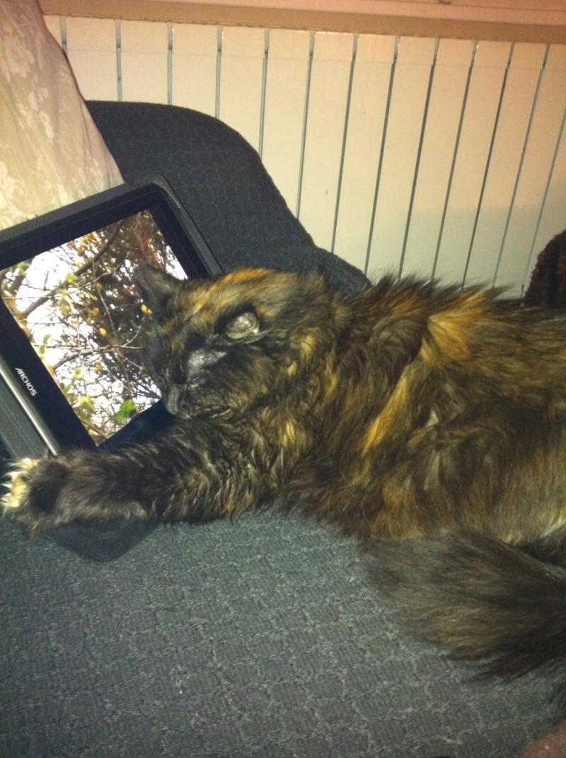 le chat et le net sa fatigue !!! Secure12
