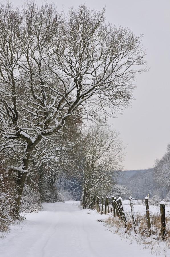 Paysages d'hiver - janvier 2013 13012110