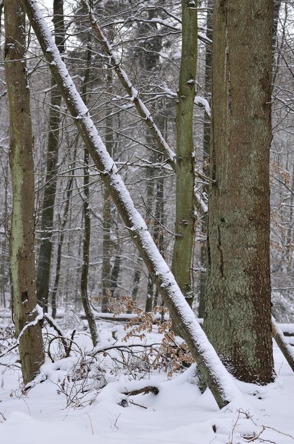 Paysages d'hiver - janvier 2013 13012111