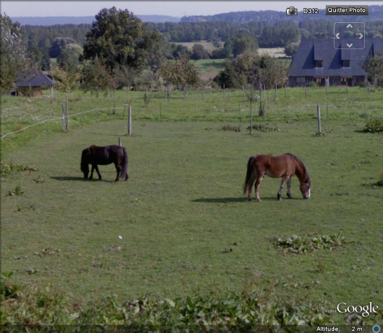 STREET VIEW : Les animaux Street10
