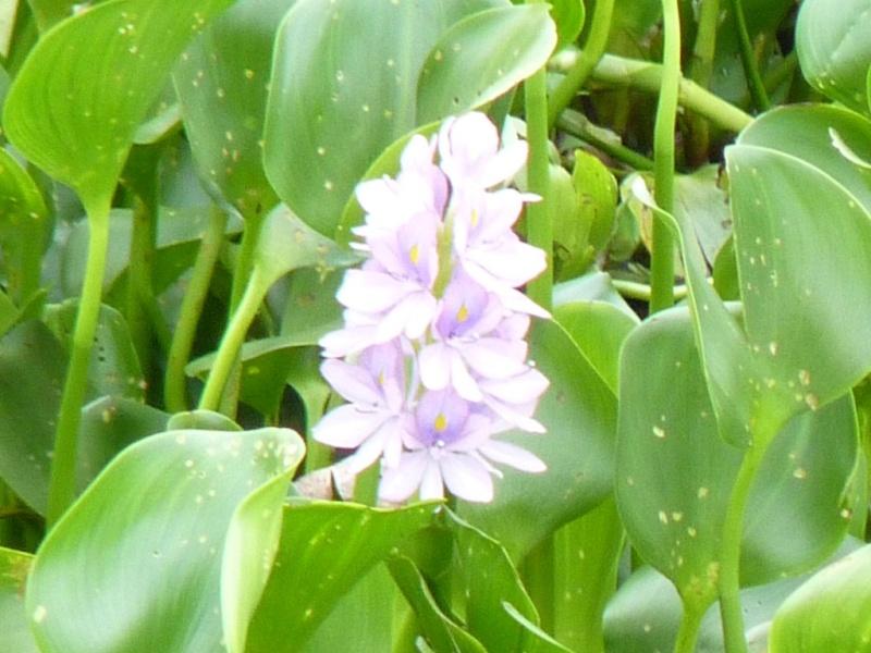 algunas flores y plagas Camlot10