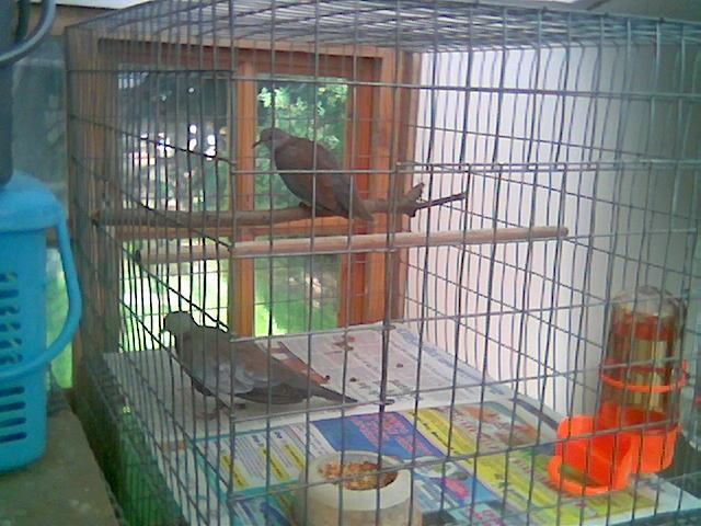 Super fast doves Image073