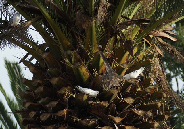 Need more palm trees! Palm10