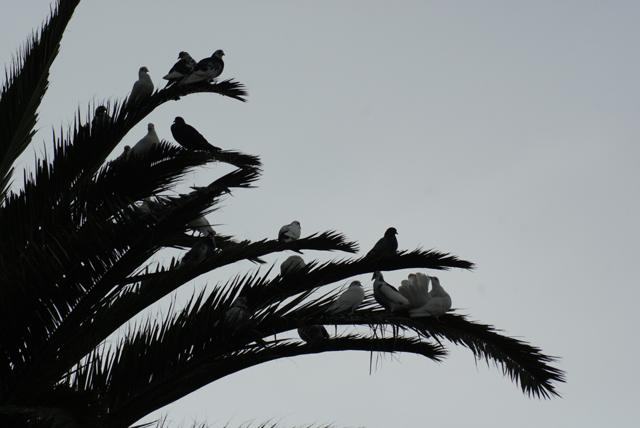 Need more palm trees! Palm111