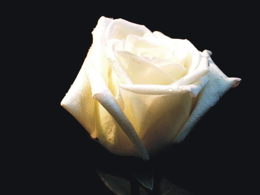 Goodbye, my sweet Velvet White210