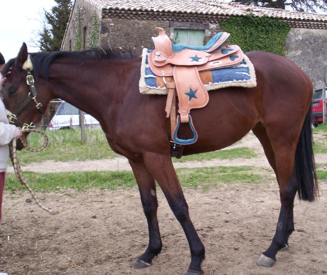 vends selle western (barrel) Dafila12