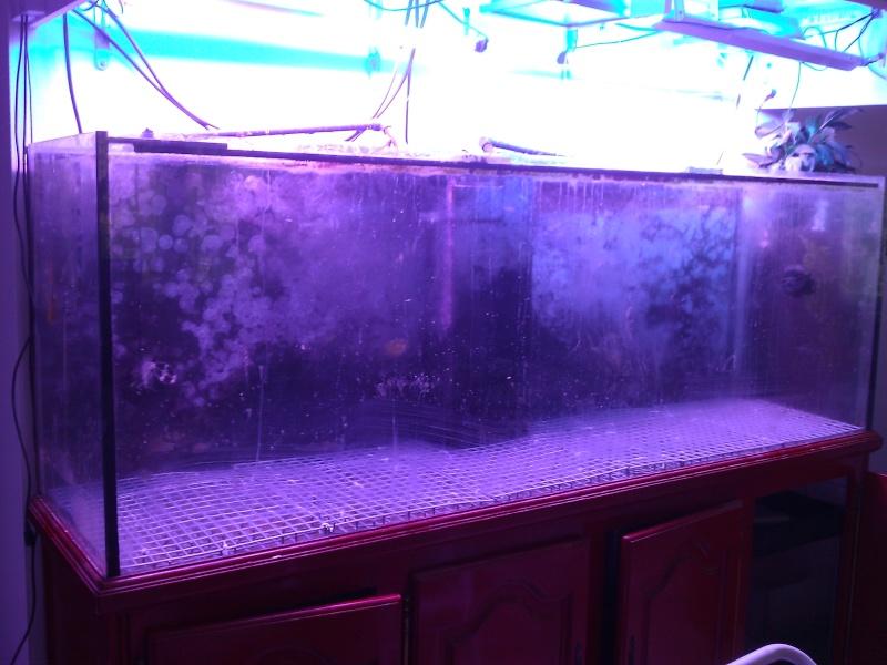 projet aquarium 700 litres jaubert - Page 3 Wp_00021