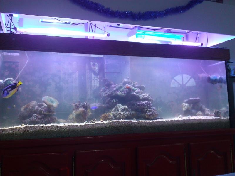 projet aquarium 700 litres jaubert - Page 3 Wp_00024