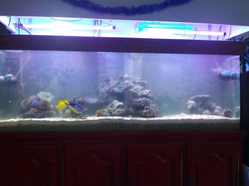 projet aquarium 700 litres jaubert - Page 3 Wp_00025