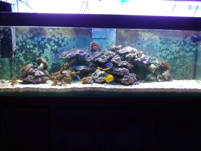 projet aquarium 700 litres jaubert - Page 3 Wp_00031