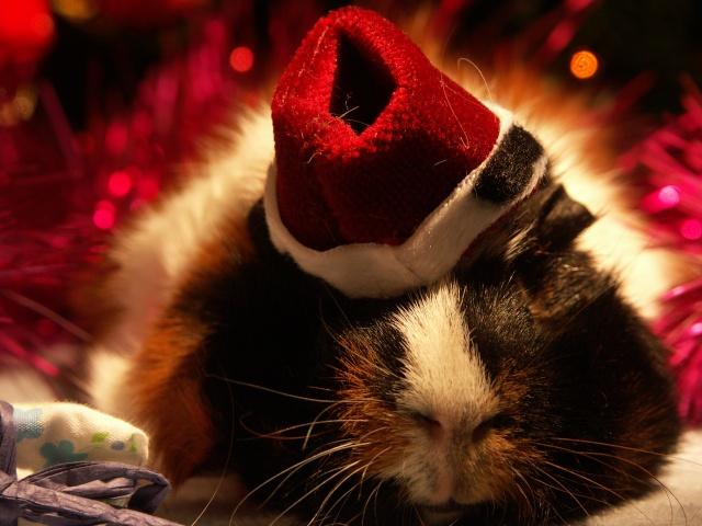 Nouvelle photo : Noël & Autre 1_noal14