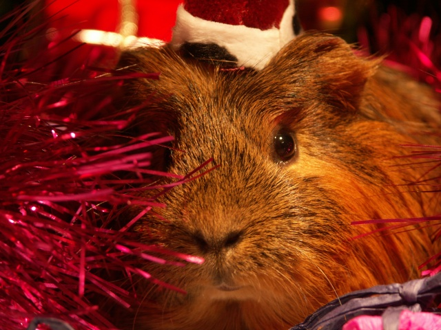 Nouvelle photo : Noël & Autre 1_noal15