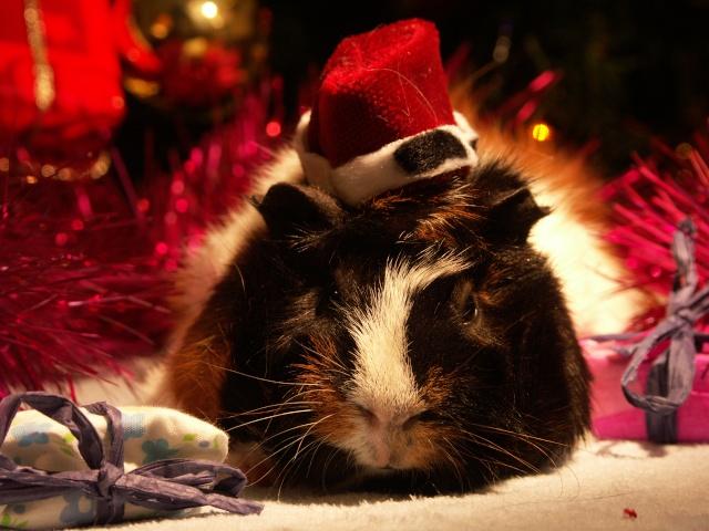 Nouvelle photo : Noël & Autre 1_noal17