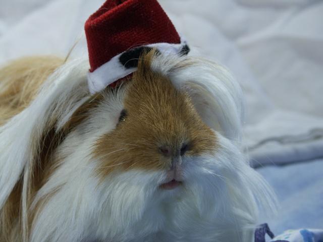 Nouvelle photo : Noël & Autre 1_noal18