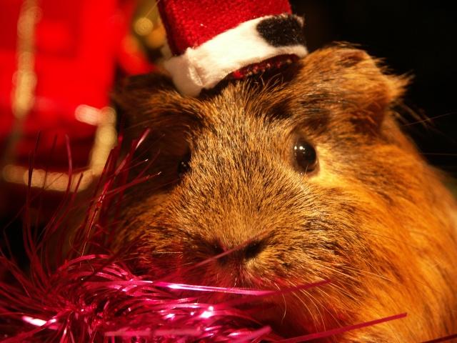Nouvelle photo : Noël & Autre 1_noal19