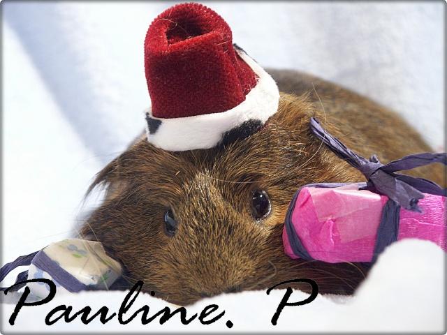 Nouvelle photo : Noël & Autre Paulin14