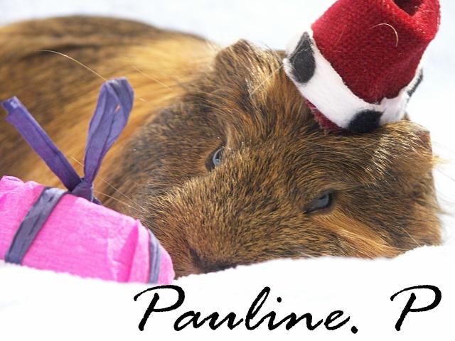 Nouvelle photo : Noël & Autre Paulin15