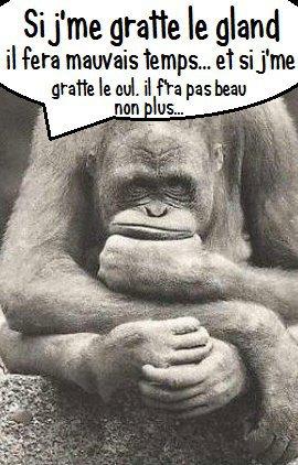 Humour en image ... - Page 4 1448_310