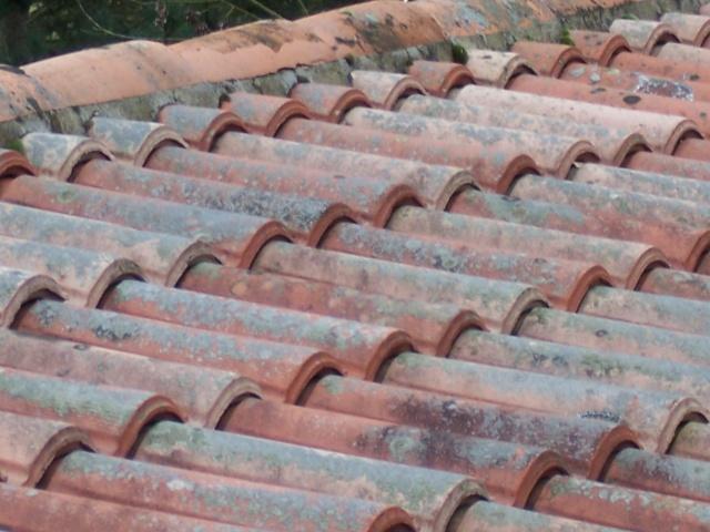 Désherbant naturel des allées/démoussage de toiture Divers11