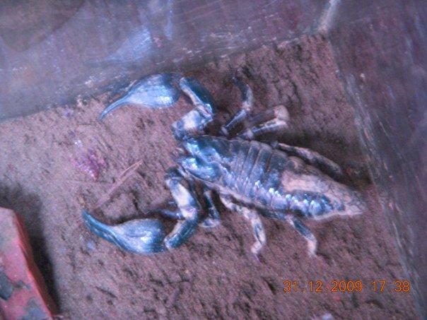 help me identify my first ever scorp pls.. Scorp10