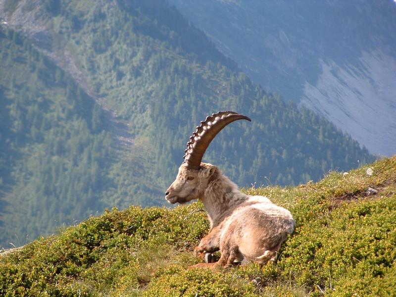 La faune du massif Bouk10