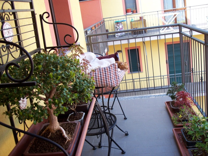 Dove coltiviamo i nostri bonsai Balcon11