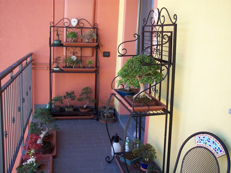 Dove coltiviamo i nostri bonsai Balcon13