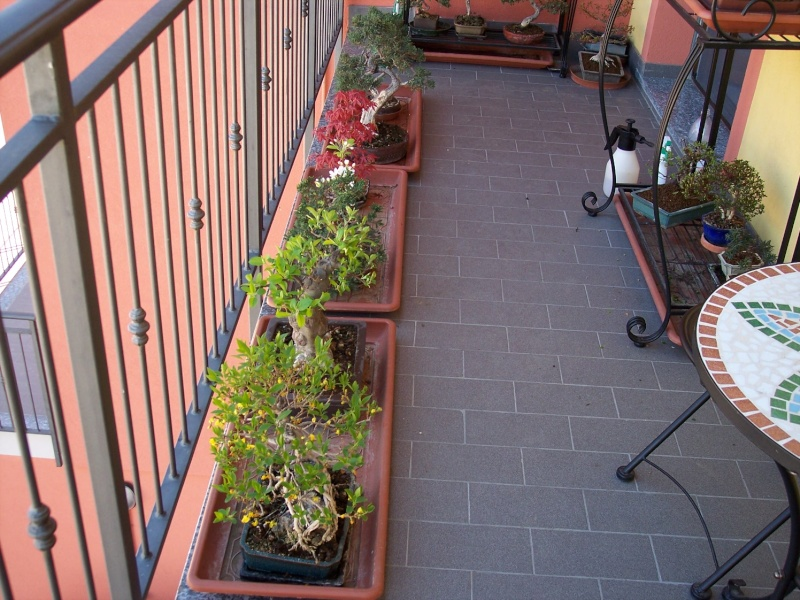 Dove coltiviamo i nostri bonsai Balcon15