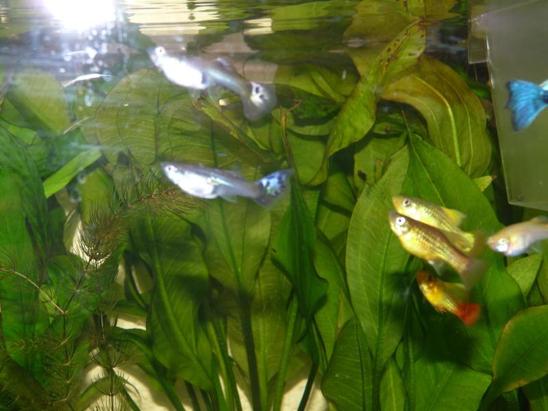 Mes deux amours et mes poissons tropicaux. P1090811