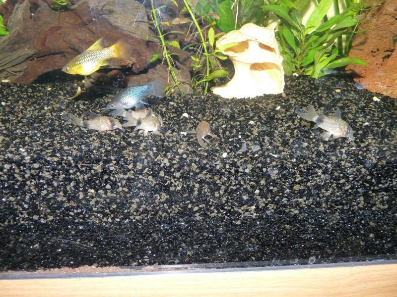 Mes deux amours et mes poissons tropicaux. P1090812