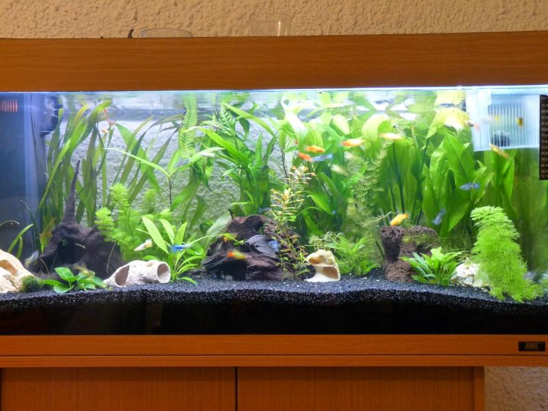 Mes deux amours et mes poissons tropicaux. P1090910