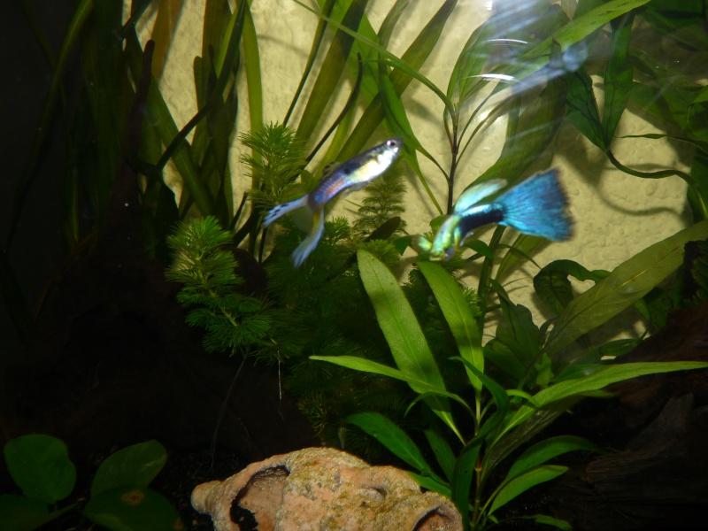 Mes deux amours et mes poissons tropicaux. P1090911