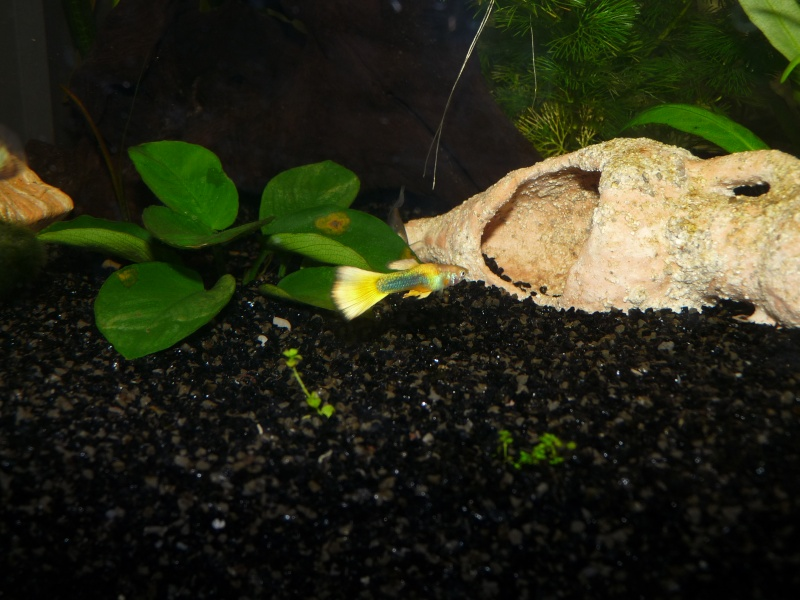 Mes deux amours et mes poissons tropicaux. P1090912