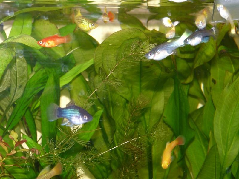 Mes deux amours et mes poissons tropicaux. P1090913