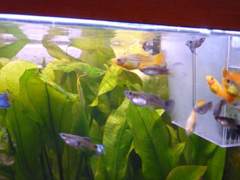 Mes deux amours et mes poissons tropicaux. P1090916