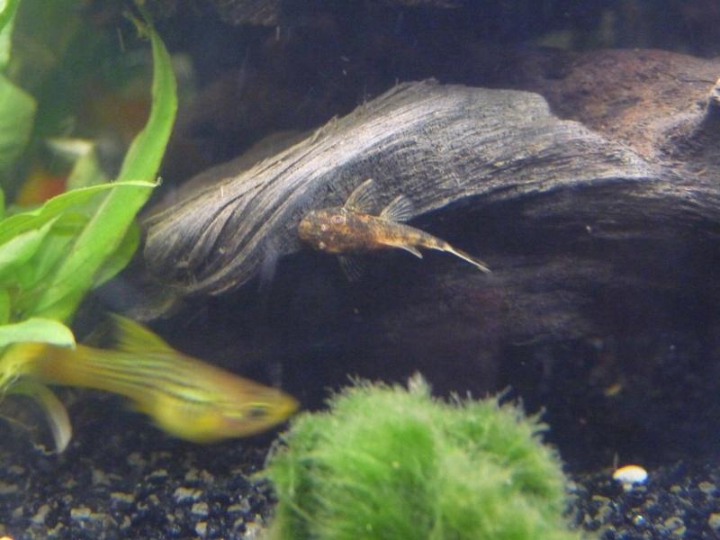 Mes deux amours et mes poissons tropicaux. - Page 3 P1100010