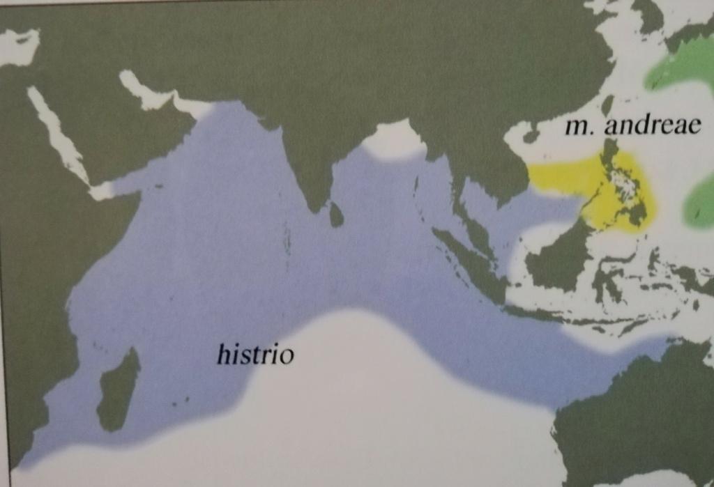 Mauritia histrio - (Gmelin, 1791) - Page 4 Img_2010