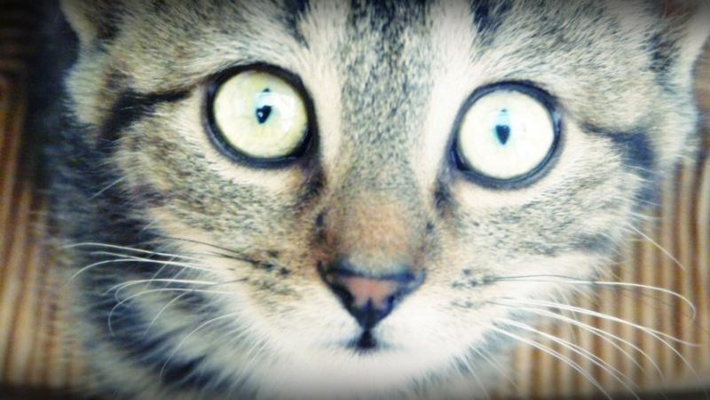 Photographie de chiens & chats 1310