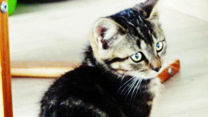 Photographie de chiens & chats 1410