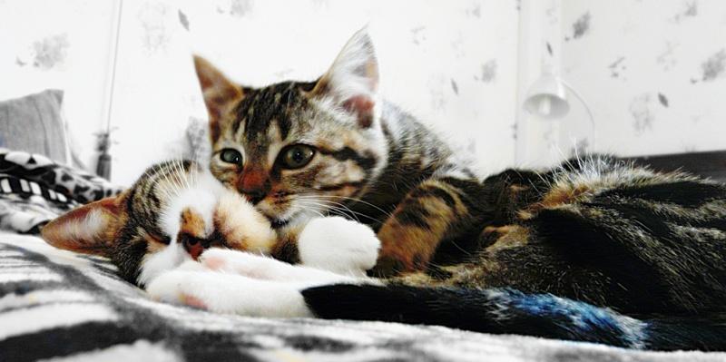 Photographie de chiens & chats 410